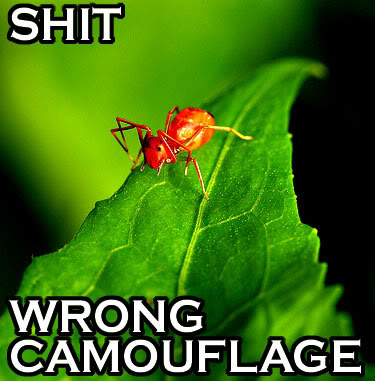 but wait, I'm a spider. who need camouflage?